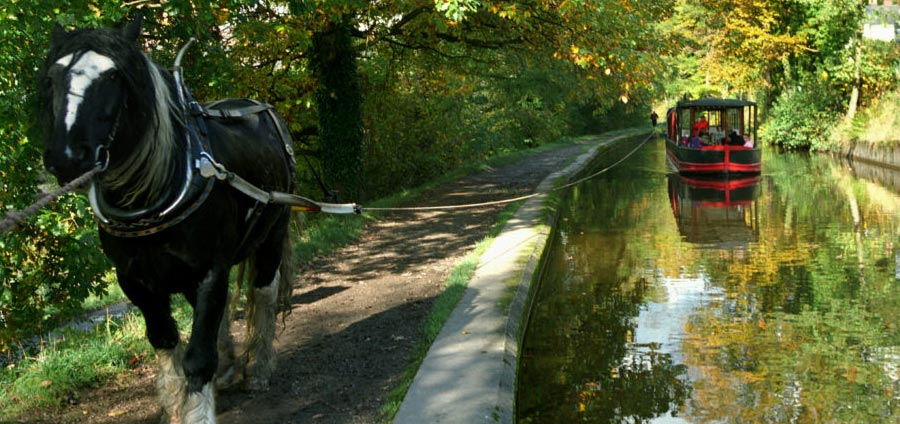 Horse-drawn canal boat trips